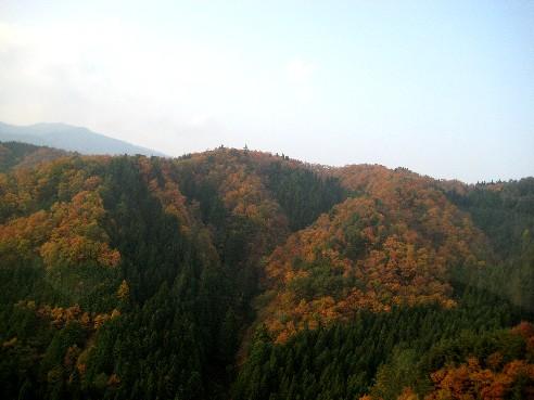 從名古屋往北到高山的一路上,都是這樣的濃濃深秋味道