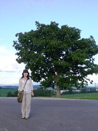 路線上著名的seven-star之木