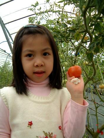 現採的蕃茄,擦一擦就可以現吃