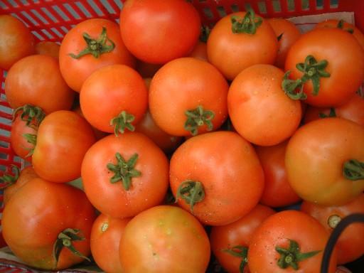火紅的蕃茄