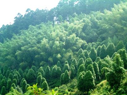 沿路樹林由熱帶林,暖帶林,一直變化為寒帶林