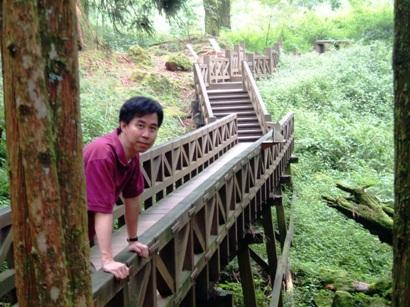 林間的木棧道,身旁處處是上千年的巨樹
