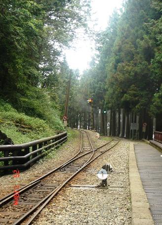 神木車站的森林