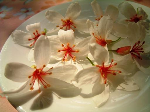 美麗油桐花