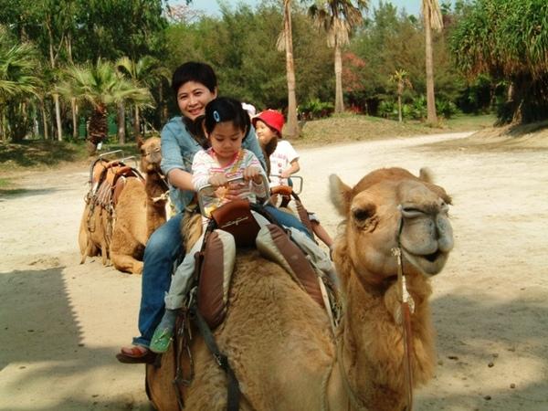 上下駱駝好驚險