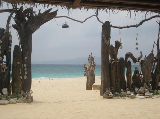 枯木。貝殼。海。