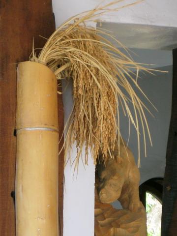 彎腰的稻穗