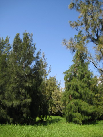 綠意盎然的森林,一點都不國外風景