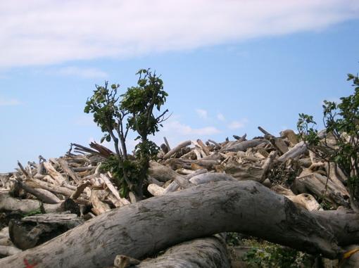 八八水災後漂流木成山