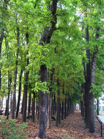 小學裡竟然有這麼夢幻的樹林!!