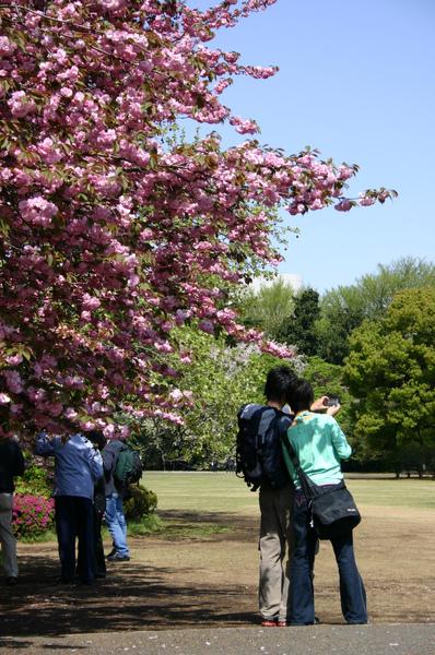 日本-新宿御院-櫻花樹下02.jpg