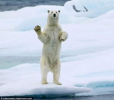 超好客的北極熊