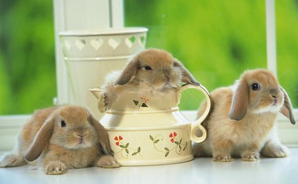兔子被點穴