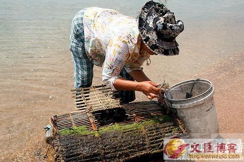 柬埔寨 女人島8