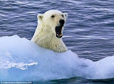 好客北極熊01.jpg