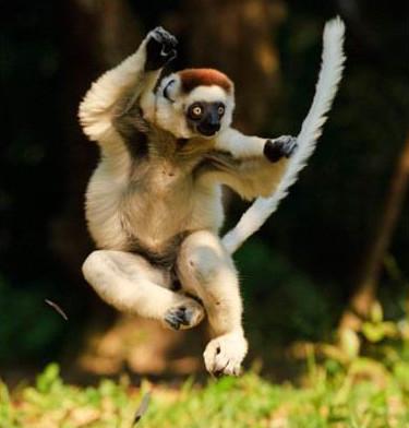 功夫狐猴2