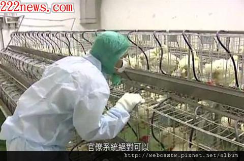 禽流感 h5n2