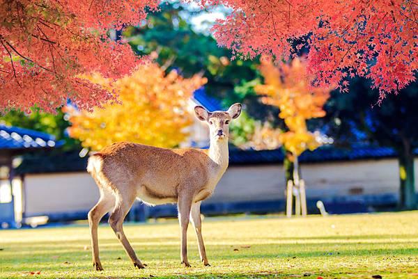 奈良4.jpg