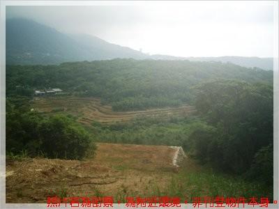新林路景觀農地 (1)