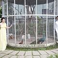【自助婚紗】【婚紗攝影】【推薦】【作品集】【台北】【高雄】攝影:羊吃草 新人:信安&照琳 晚禮服