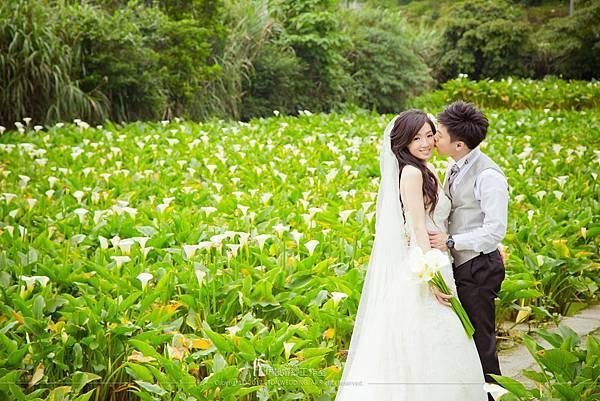 白海芋婚紗照