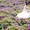 紫色繡球花婚紗照