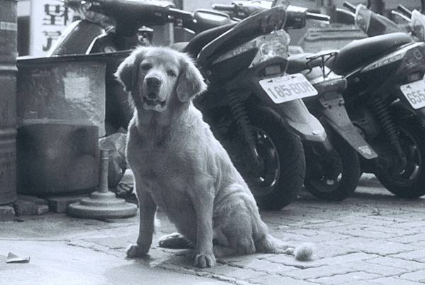 Model狗