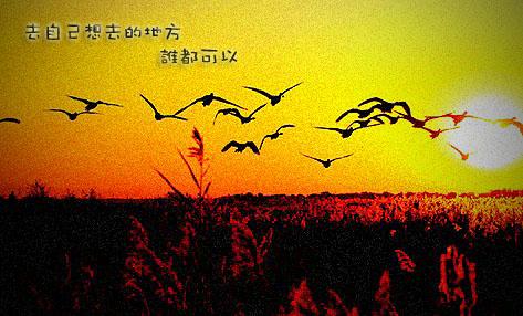 候鸟.jpg