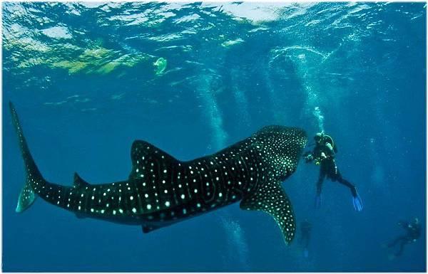 turtle-bay-dive-resort-moalboal-cebu-scuba-diving-03.jpg