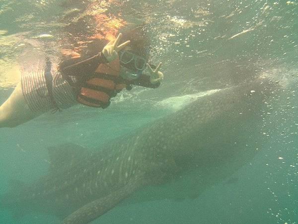 與鯨鯊共游.jpg