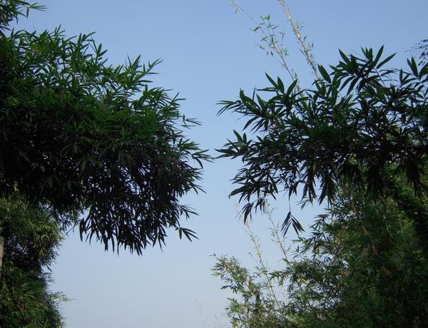 竹尾的天空