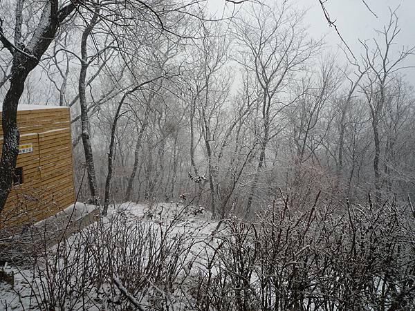 韓國的三月雪
