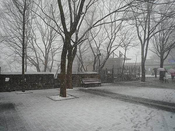 竟下起了三月雪來