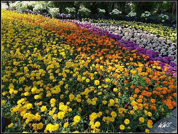 22夏威夷風情花毯