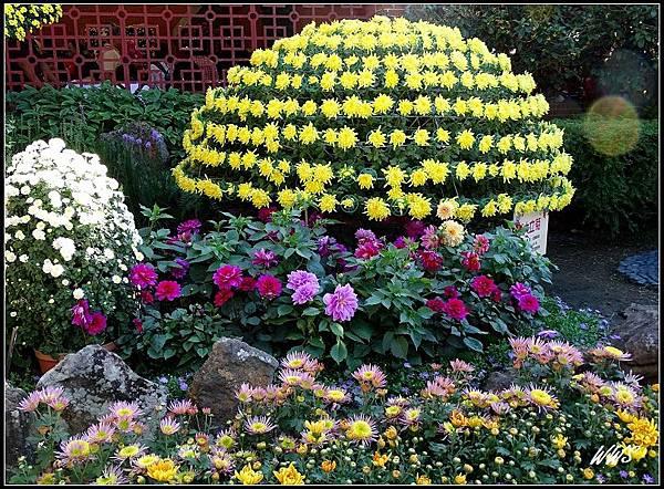 49園藝展覽館外花景