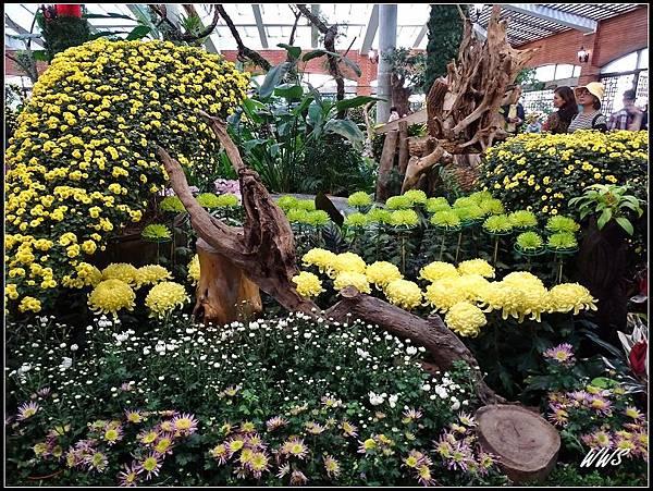 52園藝展覽館外花景