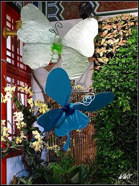55蝴蝶飛舞的夢幻國度