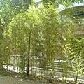 寧靜的校園5