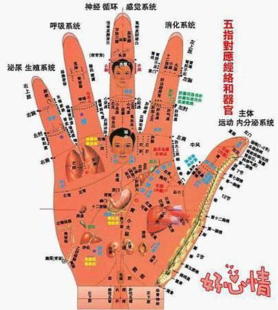 五指的對應經絡和對應器官—值得典藏