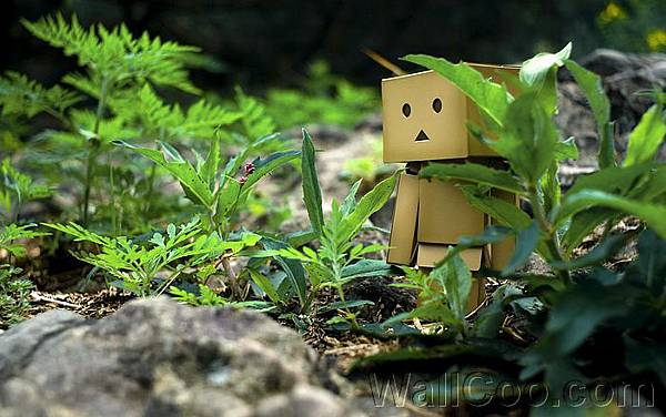 Danbo_Danboard_photo_120730