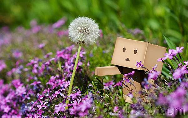 Danbo_Danboard_photo_342952