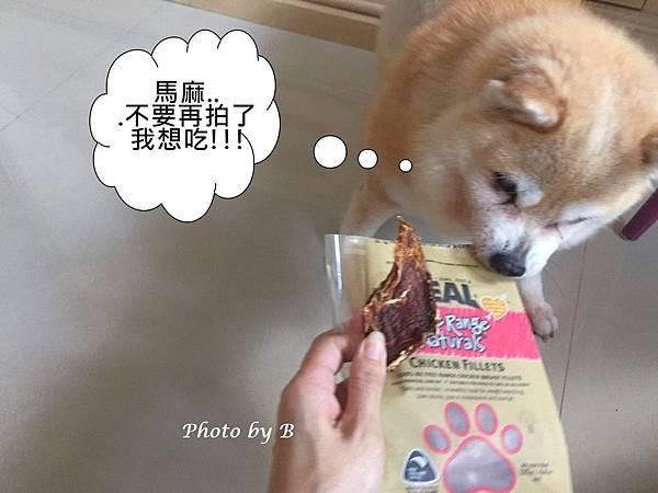 狗飼料_47.jpg