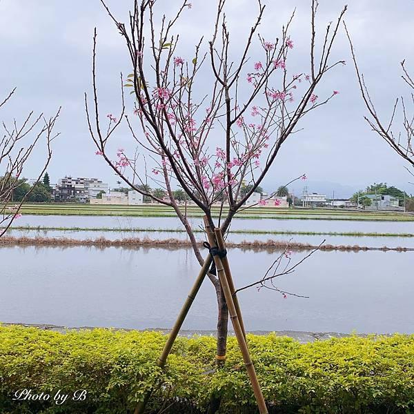 青禾別苑_200225_0013.jpg