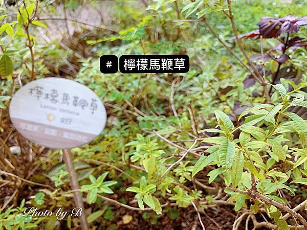 818薰衣草森林_200827_40.jpg