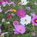 超可愛的小花花