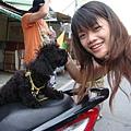 第一天--小綠和狗狗