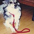 賴賴和小紅繩