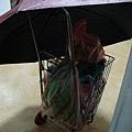 還幫菜籃車撐傘...