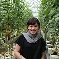 蕃茄聯合國的蕃茄園