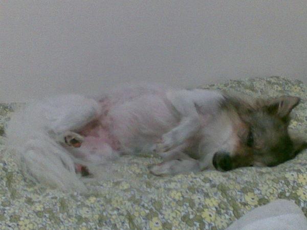 在床上睡得稀哩呼嚕